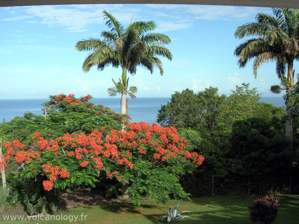 Flamboyant de Guadeloupe